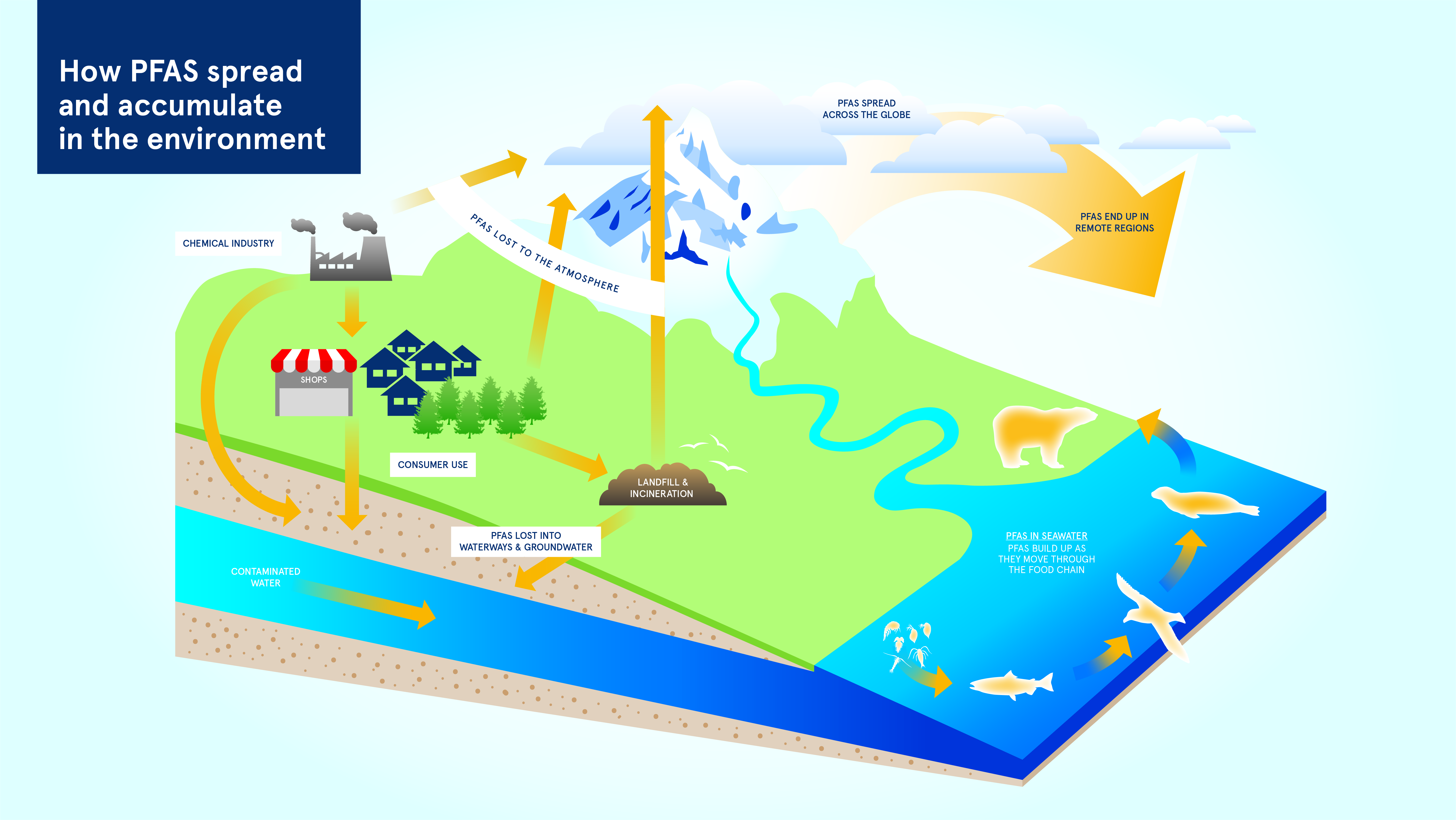 How PFAS spreads and builds up in the environment