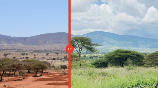 Before and after image of grassland restoration in Tanzania